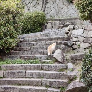 猫,動物,屋外,樹木,岩,石,草木,お別れ