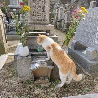 猫,動物,屋外,オレンジ,座る,地面,ネコ,泥棒猫