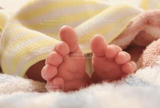 小さな足もとの写真・画像素材[4473438]