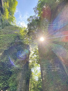 自然,空,屋外,緑,光,樹木,新緑,旅行,休日