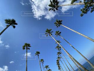自然,空,屋外,椰子の木,雲,青空,青い空,樹木,ヤシの木,chill,綺麗な空,リゾート気分,Island breathe
