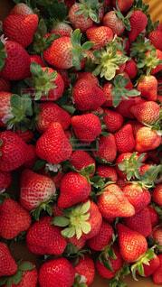 食べ物,いちご,フルーツ,果物,ベリー,strawberry,スーパーフード,イチゴ,あまおう,ダイエット食品,自然食品
