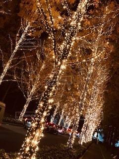 冬,夜,カップル,屋外,樹木,イルミネーション,照明,暖かい,明るい,デート,景観,暖色,年末,冬休み,クリスマス ツリー