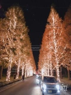 冬,夜,屋外,綺麗,樹木,ライトアップ,クリスマス,銀杏,照明,並木道,装飾,明るい,デート,街路樹,電飾,銀杏並木,クリスマス ツリー
