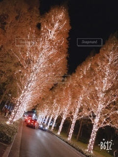 風景,冬,夜,カップル,屋外,綺麗,花火,樹木,イルミネーション,道,クリスマス,照明,装飾,明るい,デート,街路樹,クリスマス ツリー