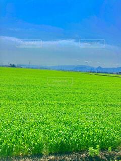 自然,風景,空,屋外,緑,雲,景色,農業,日中
