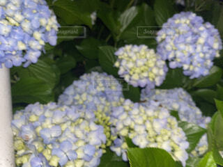 花,緑,葉,草木,ガーデン,フローラ