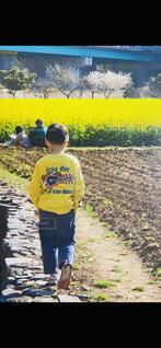 風景,花,屋外,後ろ姿,黄色,子供,人物,人,地面,少年,草木,子供と花
