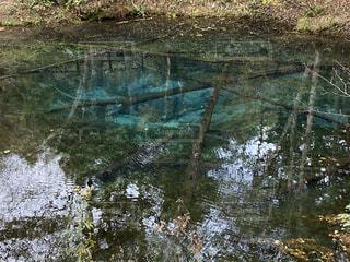自然,湖,樹木,神秘,青い池
