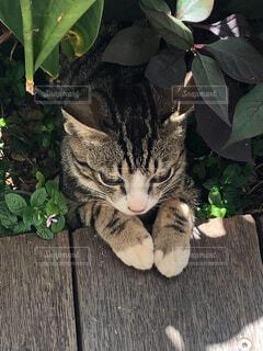 猫,動物,子猫,木目,草木