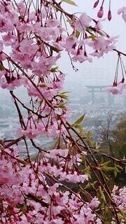 花,湖,ピンク,水面,霧,草木