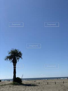 自然,空,屋外,ビーチ,雲,ヤシの木