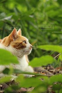 猫,動物,屋外,緑,樹木,江ノ島,cat,島猫