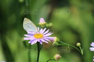 花,動物,緑,昆虫,flower,蝶,草木
