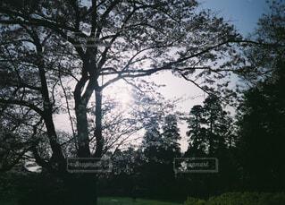 自然,風景,空,屋外,雲,霧,草,樹木,草木