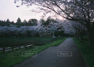 空,公園,花,屋外,桜並木,草,樹木