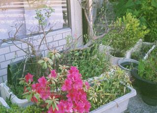 風景,花,植木鉢,観葉植物,草木,ガーデン