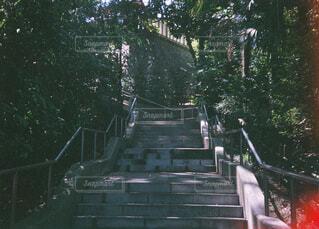 公園,木,屋外,神社,階段,樹木,フィルム,段差
