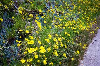 公園,花,春,屋外,黄色,景色,黄色い花,フィルム,カラー,草木,写ルンです,春の花,ガーデン,エモい