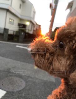 犬,夏,屋外,太陽,散歩,道路,ゆうひ