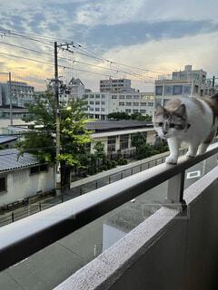 建物の上に座っている猫の写真・画像素材[4536991]