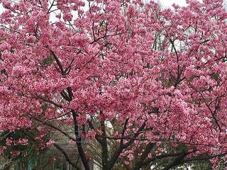 春の写真・画像素材[413929]