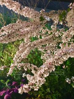 春 - No.413940