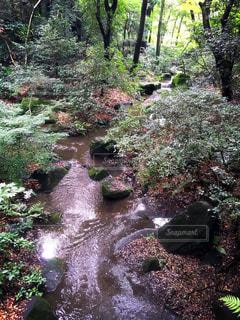 東京の写真・画像素材[441726]