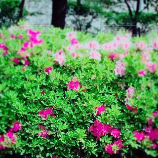 春 - No.458801