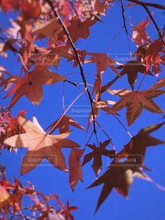 ♡ 秋 みつけた ♡の写真・画像素材[879186]