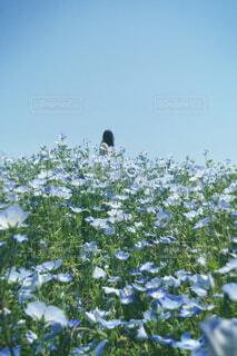 空,花,屋外,樹木,ネモフィラ,草木