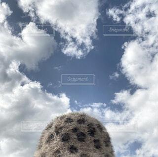 空,屋外,雲,帽子