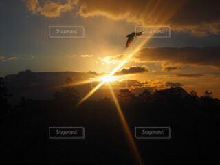 空,鳥,屋外,太陽,朝日,雲,夕暮れ,暗い,飛ぶ,初日の出