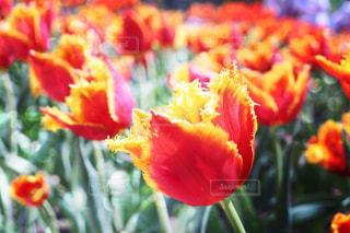 花の写真・画像素材[554637]