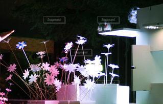 花の写真・画像素材[572844]