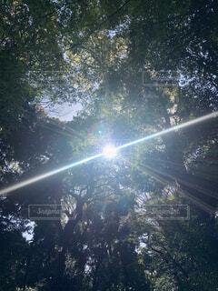 空,屋外,日光,樹木,明るい,スプリンクラー,日中,レンズフレア