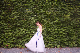 ドレスの写真・画像素材[799872]