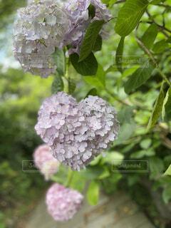 花のクローズアップの写真・画像素材[4530178]