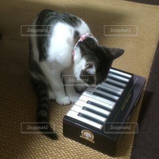スーツケースの上に座っている猫の写真・画像素材[4536528]