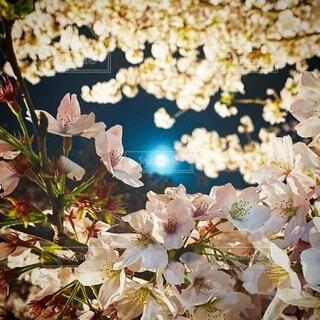 自然,風景,空,桜,花見,夜桜,月,満月,桜見,4月の満月