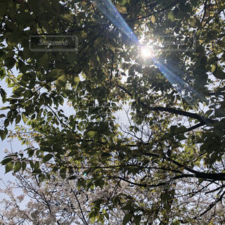 自然,空,秋,屋外,晴れ,晴天,葉,木漏れ日,樹木,快晴,草木