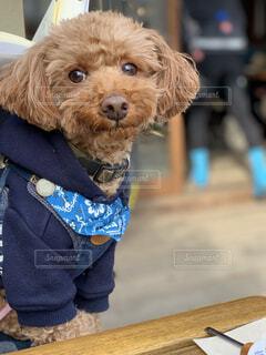 犬,カフェ,散歩,ペット,トイプードル,ドッグカフェ,テラスカフェ,犬の居る暮らし,ペット同伴