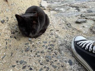 足元で寝る猫の写真・画像素材[4481113]