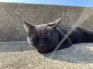 猫,動物,昼寝,景色,港,グレー,コンクリート,野良猫,地面,石,黒猫,猫島,ネコ科,セメント