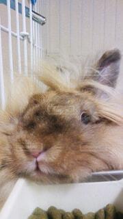 動物,屋内,かわいい,ウサギ