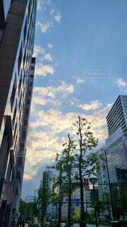 空,屋外,雲,樹木,高層ビル