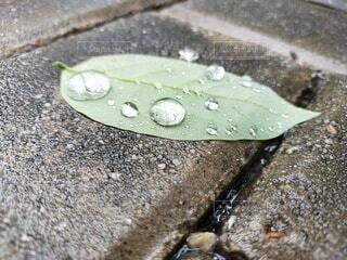 自然,水滴,地面