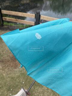公園,桜,芝生,雨,傘,青,池,花びら,折りたたみ傘