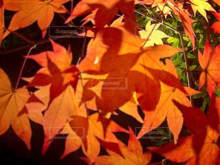 近くの花のアップの写真・画像素材[851702]