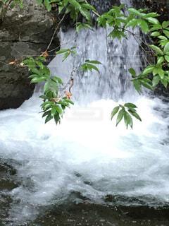 自然,屋外,水面,滝,草木
